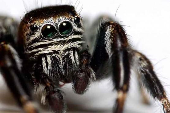 интересни факти за паяците