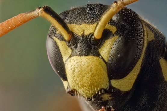 animals insects wasp 3000×2000 wallpaper_www.wallmay.com_19