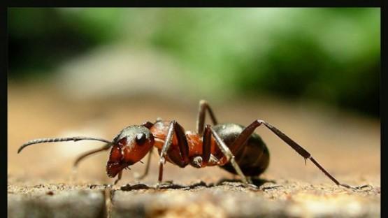 mravkite-predskazvali-zemetreseniq-147058