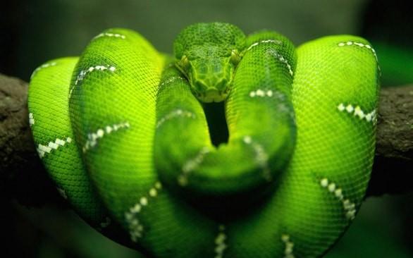 интересни факти за змиите