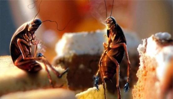 невероятни факти за хлебарките