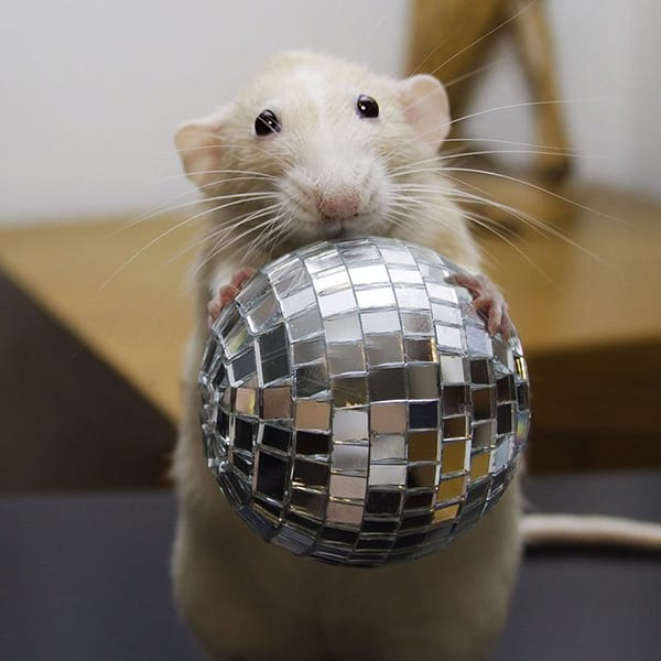 Marty-with-Disco-Ball-min