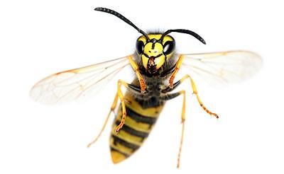 wasp 2 съвети