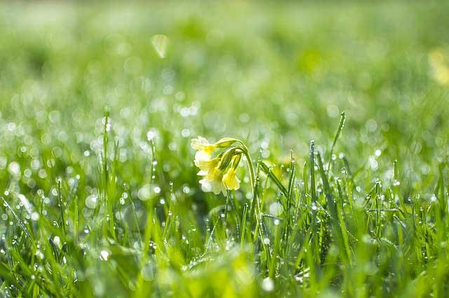 трева - кърлежи