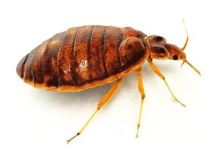 кой е инсектът от снимката