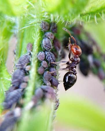 насекоми-съзнание