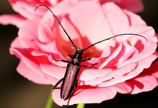 Защо има толкова много насекоми?