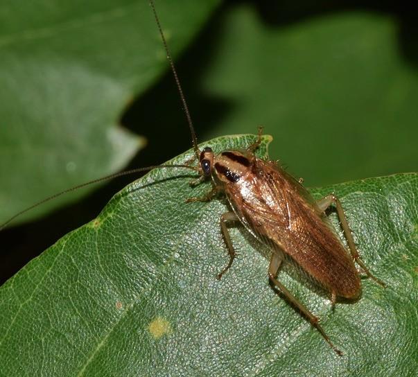Издържат ли хлебарките на радиация?