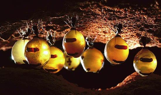 медни мравки 3