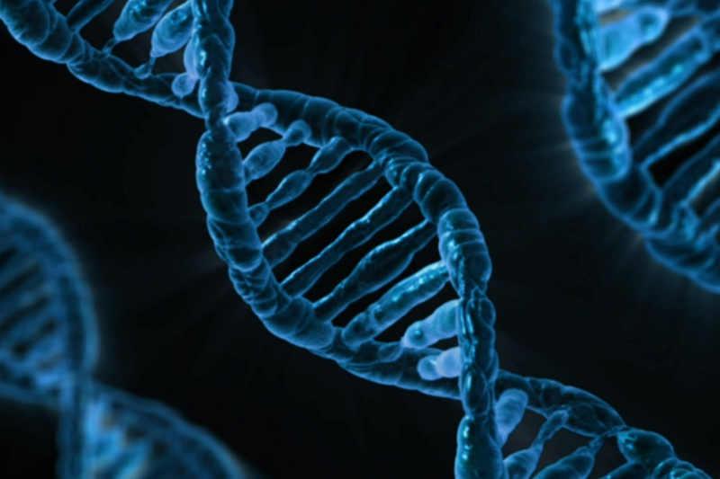 Генетично се предават фалшиви спомени у мишките
