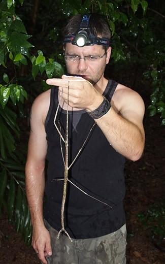 насекомо пръчица - най-голямото в света