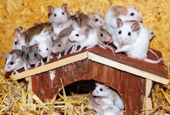 Фалшиви спомени у мишките се предават генетично