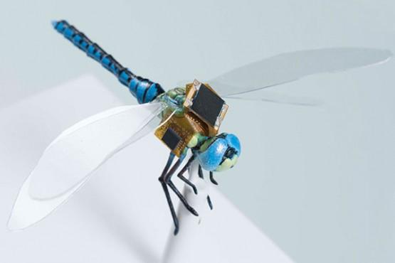 Учени превръщат водни кончета в мини киборг дронове