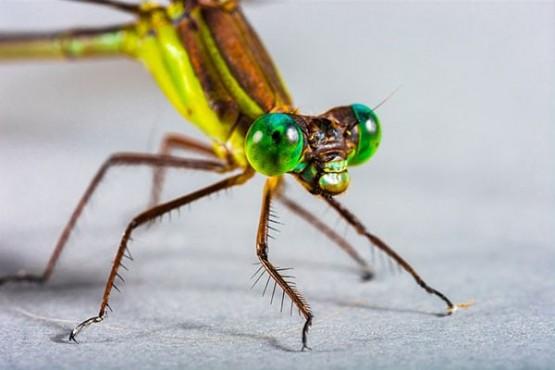митове за насекомите