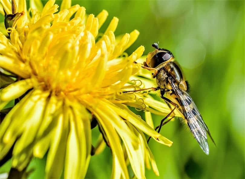 Лечение на алергия от ужилване от оса