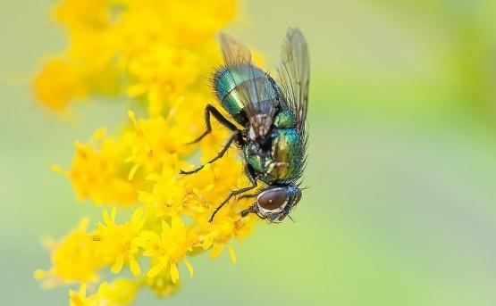 времето тече по-бавно за мухите
