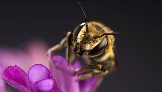 диви пчели рециклират пластмаса
