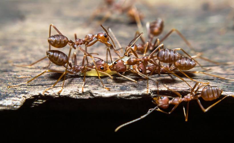 как да се отървем от мравките