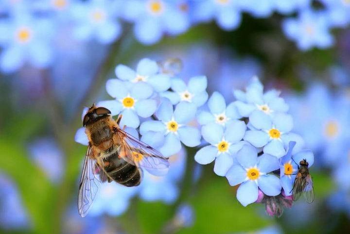 ползи от насекомите