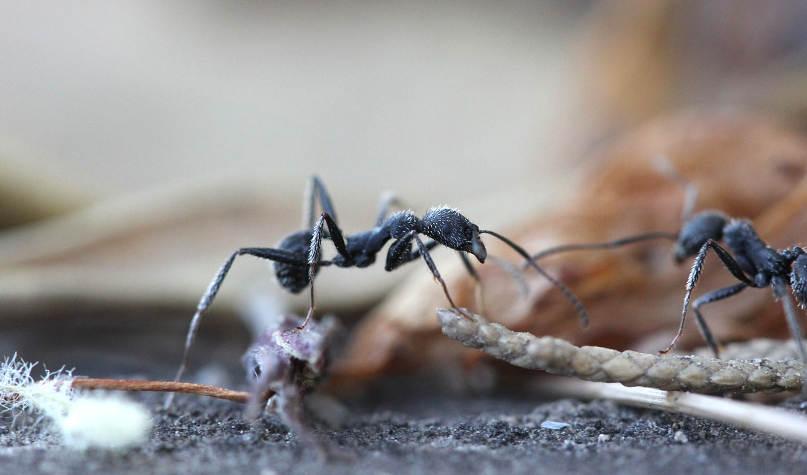 14 начина как да се отървем от мравките