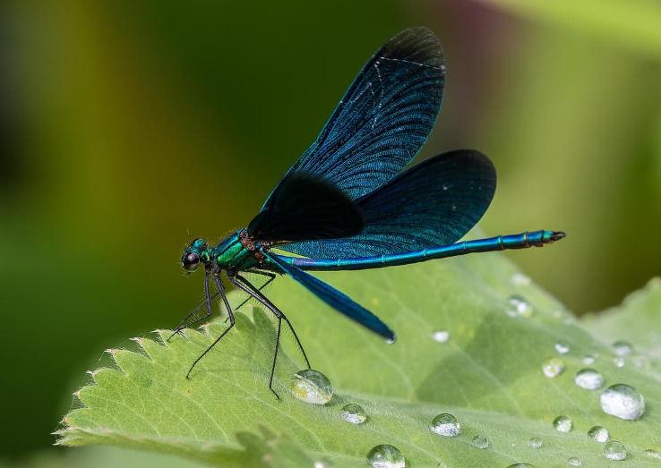 7 ползи от насекомите
