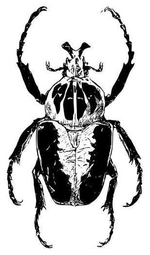 бръмбар голиат