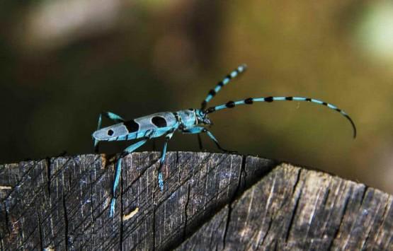 изненадващи факти за насекомите