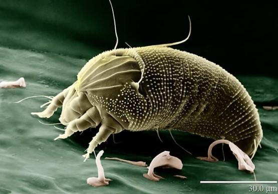 най-старите насекоми на планетата