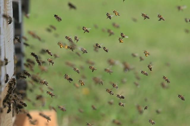 как пчелите комуникират