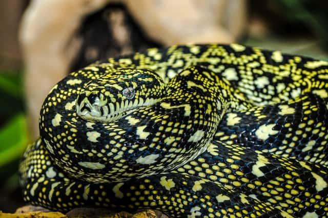 еволюция на змиите