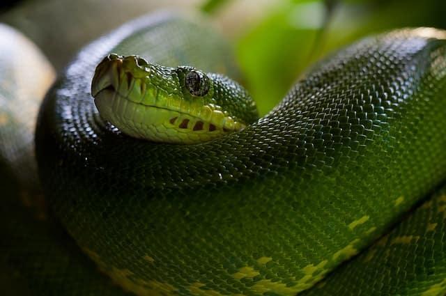 змии еволюция
