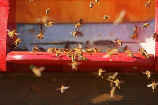 как пчелите си общуват