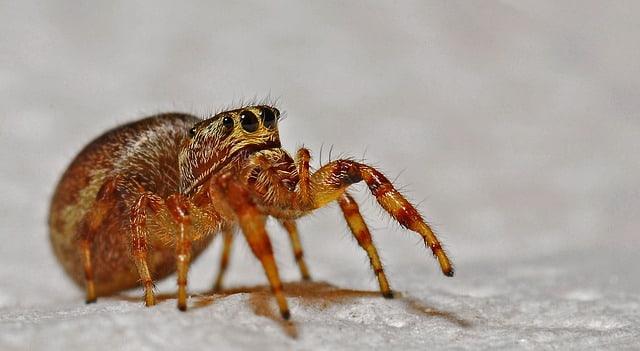 какви насекоми обитават дома ни