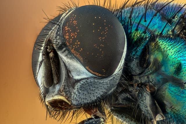 как да се избавим от насекомите у дома