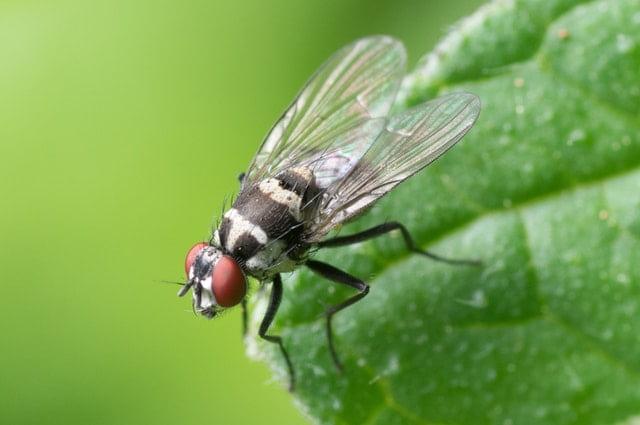 мухи интересни факти