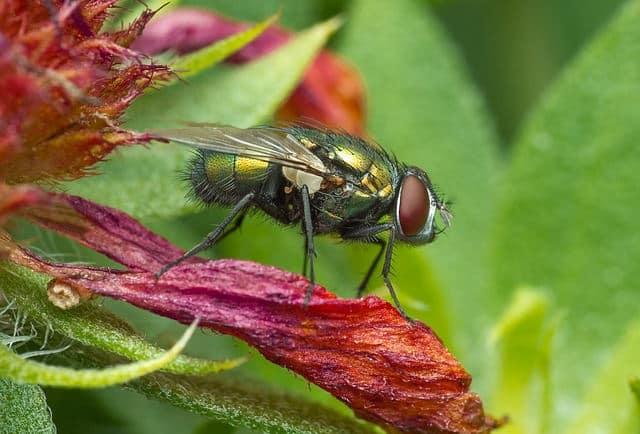 9 неща, които не знаем за мухите