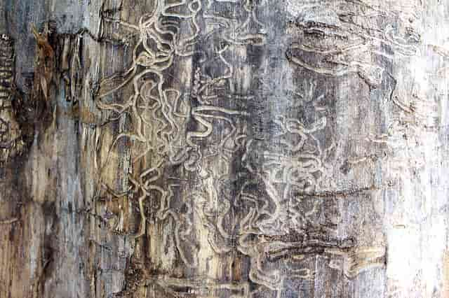 следи от термити