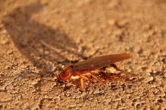 хапят ли хлебарките