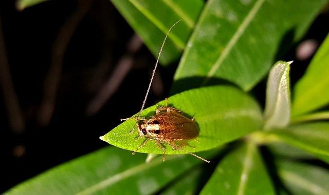 хлебарки хапят ли